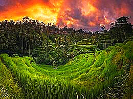diaporama pps Tegalalang rice terrace Philippines