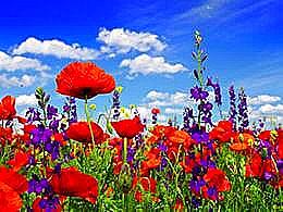 diaporama pps Vases de fleurs