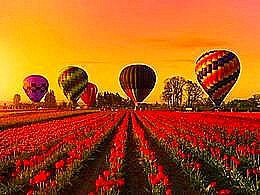 diaporama pps Wooden shoe tulip farm USA