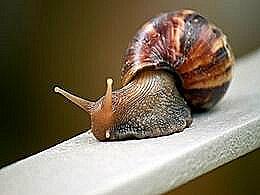 diaporama pps 11 faits fascinants sur les escargots