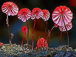 diaporama pps 40 photos des plus beaux champignons