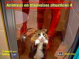 diaporama pps Animaux en mauvaises situations 4