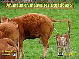 diaporama pps Animaux en mauvaises situations 5
