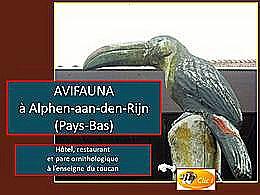 diaporama pps Avifauna – Pays-Bas
