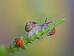 diaporama pps Ballet des escargots et des insectes