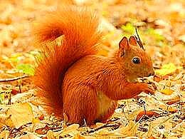 diaporama pps Beauté de l'écureuil