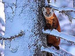 diaporama pps Bonjour l'hiver