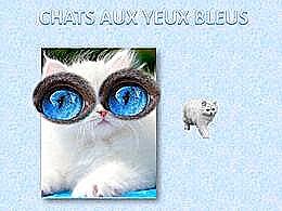 diaporama pps Chats aux yeux bleus