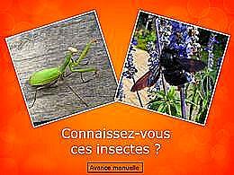diaporama pps Connaissez vous ces insectes