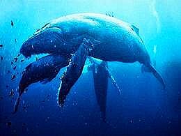 diaporama pps Dans nos océans des créatures