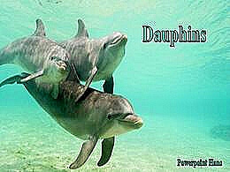 diaporama pps Dauphins
