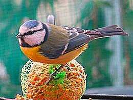 diaporama pps Magnifiques images de la nature 11