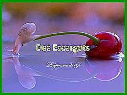 diaporama pps Des escargots