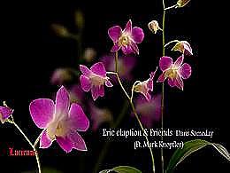 diaporama pps Des fleurs