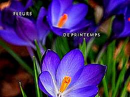diaporama pps Fleurs de printemps