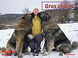 diaporama pps Gros chiens