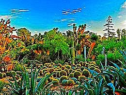 diaporama pps Huntington desert garden – USA