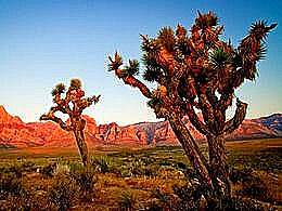 diaporama pps Joshua Tree – USA