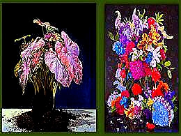 diaporama pps Eric Wert – Peintures de natures mortes