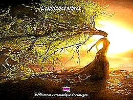 diaporama pps L'esprit des arbres