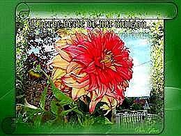 diaporama pps L'herbe de ma maison