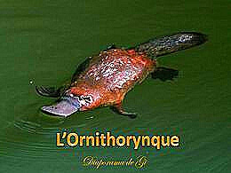 diaporama pps L'ornithorynque