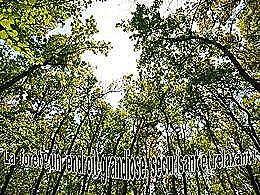 diaporama pps La forêt apaisante