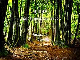 diaporama pps La forêt – Quand tu erres dans les bois