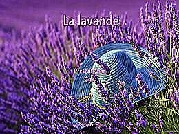 diaporama pps La lavande