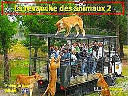 diaporama pps La revanche des animaux 2