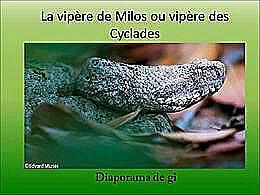 diaporama pps La vipère de Milos