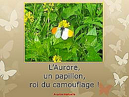diaporama pps L'aurore un beau papillon