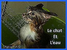 diaporama pps Le chat et l'eau