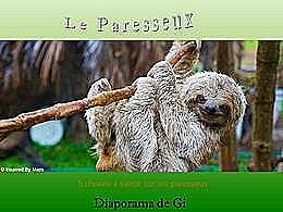 diaporama pps Le paresseux