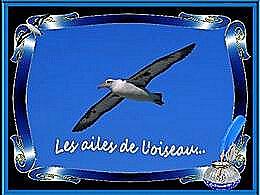 diaporama pps Les ailes de l'oiseau