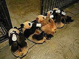 diaporama pps Destinations pour les amoureux des animaux