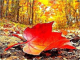 diaporama pps Les feuilles mortes