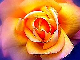 diaporama pps Les fleurs