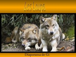 diaporama pps Les loups