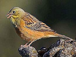 diaporama pps Les oiseaux en danger