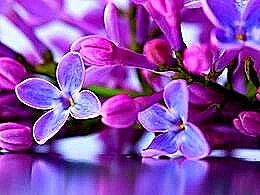 diaporama pps Lilac