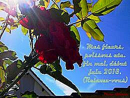 diaporama pps Mes fleurs et poissons – Mai Juin 2018