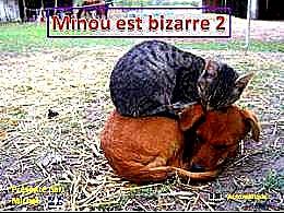 diaporama pps Minou est bizarre 2