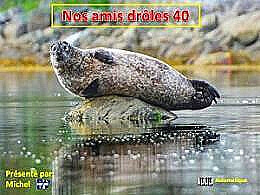 diaporama pps Nos amis drôles 40