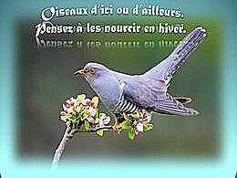 diaporama pps Oiseaux d'ici et d'ailleurs