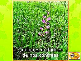 diaporama pps Orchidées locales