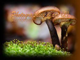 diaporama pps Photographies d'art 2