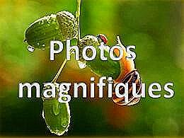 diaporama pps Photos magnifiques