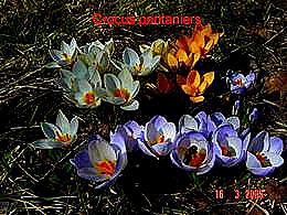 diaporama pps Premières fleurs de mon jardin