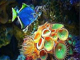diaporama pps Beautés de la faune et flore sous marine